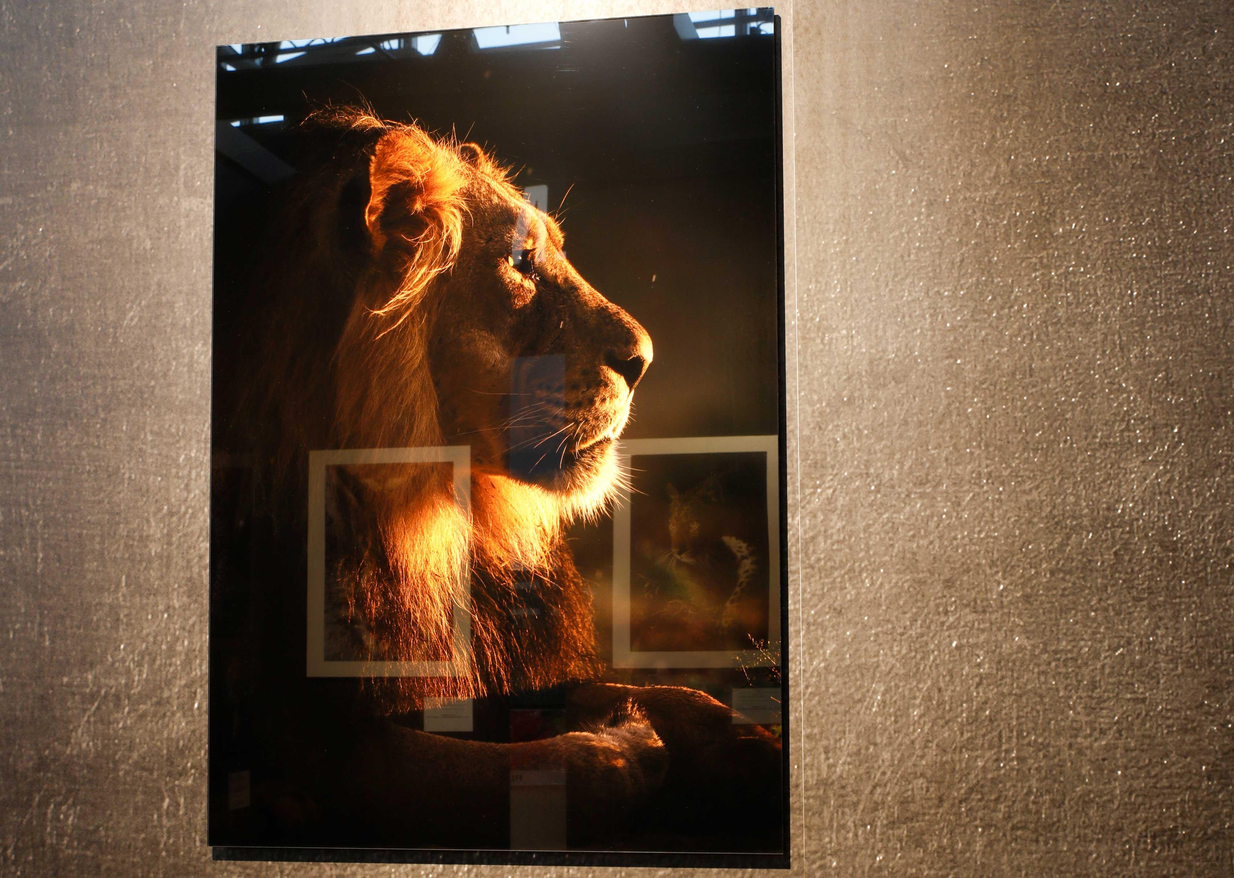 kaschiermaschine_fotos_acrylglas